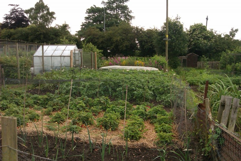 Louth Allotment