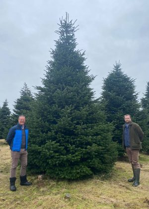 Picking a tree for Christmas 2020